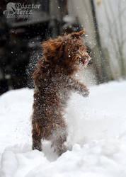 Snow dog by Hikari-kirin