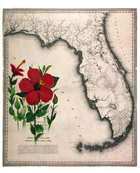 Red hibiscus of the Tropics. Painting, vintage map by RFabiano