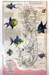 Queen Triggerfish of Bermuda by RFabiano