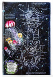 Nocturnal jellyfish by RFabiano