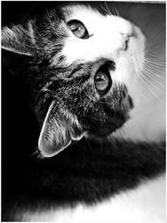 Minnie Cat by Liv7-X