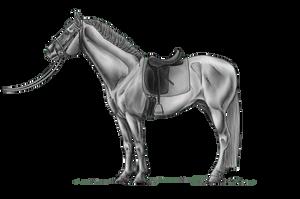 Dressage Horse By Stillre Greyscale by AquaSalt