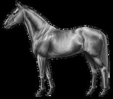 Warmblood Lineart By Jiphorse Greyscale by AquaSalt
