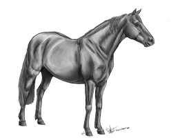 Free Pony Lineart By Kawisaurus Greyscale by AquaSalt