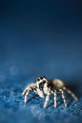 Spider III by Freggoboy