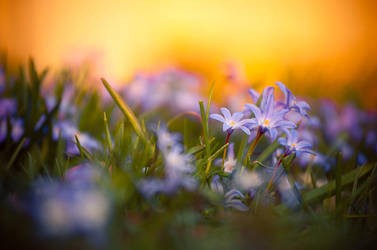 Flowers in the Sunset by Freggoboy