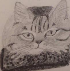 Cat by LunaRedwing