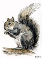 Squirrel by D-MAC