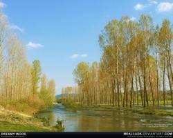 Dreamy wood by MeAli-ADK