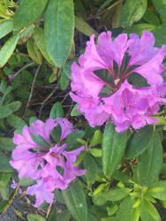 Flowers by Makeamukero