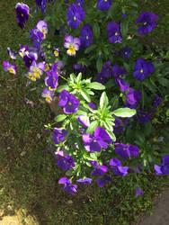 blue flowers by Makeamukero