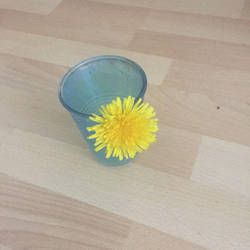 A dandelion by Makeamukero