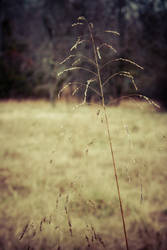 Dead Field by starchanchan
