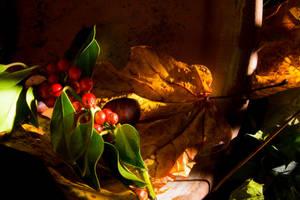Autumn 1 by stevezpj