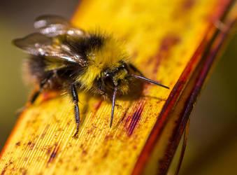 Chasing Bees 03 by stevezpj