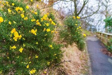 Path to Spring by stevezpj