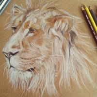 Lion Face by stardust12345
