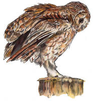 SALE Limited Edition Tawny Owl Giclee Print by stardust12345