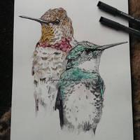 Hummingbirds by stardust12345