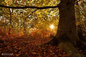 Autumn shelter by matthieu-parmentier