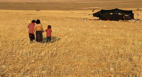 Sarikecililer by tahirozgur