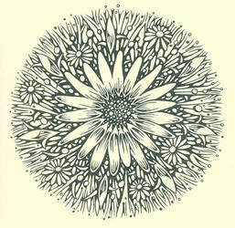 daisies by rudat