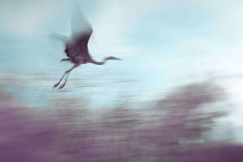 Flight by 3wyl