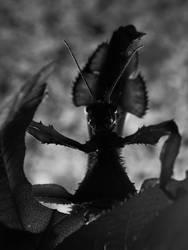 Curious Mantis by AntaresAquarii