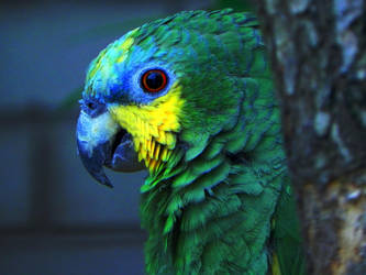 Sketchy parrot by AntaresAquarii