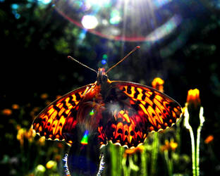 Sunray's butterfly blessing by AntaresAquarii