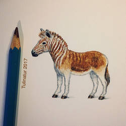 Quagga (Equus quagga quagga) - 1883 by Tulinatur