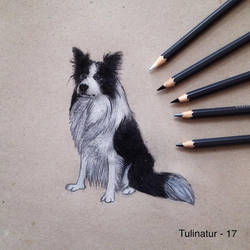 Bordercollie by Tulinatur