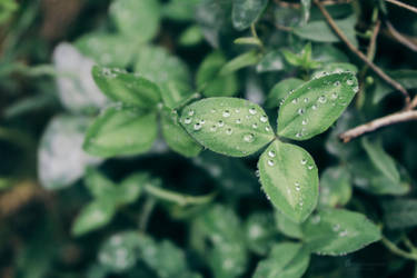 Droplets by Photometheus