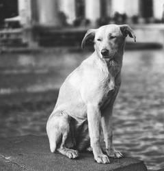 Street Dog by Photometheus