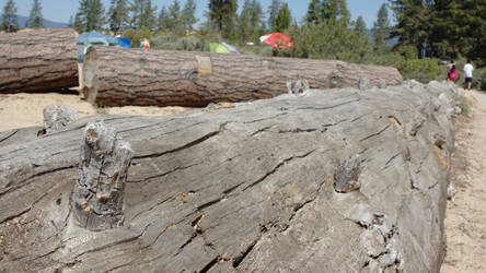 Bumps on a Log by MegaRaptor86