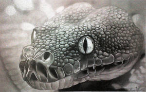 Snake by Xtranu