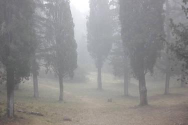 Mist (3) by smaragdistock