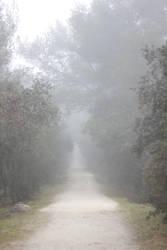 Mist (4) by smaragdistock