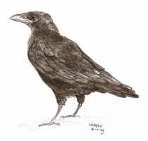 crow sketch by Liedeke