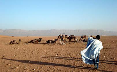 Camel Herder by serafin666