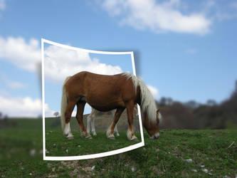 Cavalli al pascolo by imediacreatives