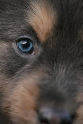 New blue eye by SaNNaS