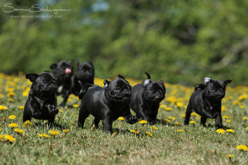 Licorice running down a hill by SaNNaS