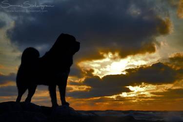 Swedish sunrise Zodd by SaNNaS