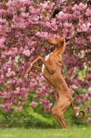 Dancing queen by SaNNaS