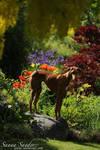 The gardener by SaNNaS