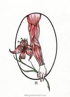 Lilium by Penti-Menti