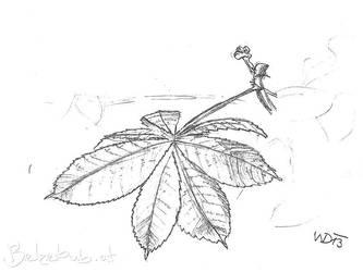 Chestnut Leaf by 5dave