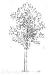 Chestnut Tree by 5dave