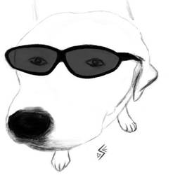 Cool Dog by 7sv